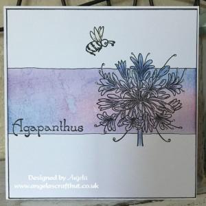 agapanthus-banner